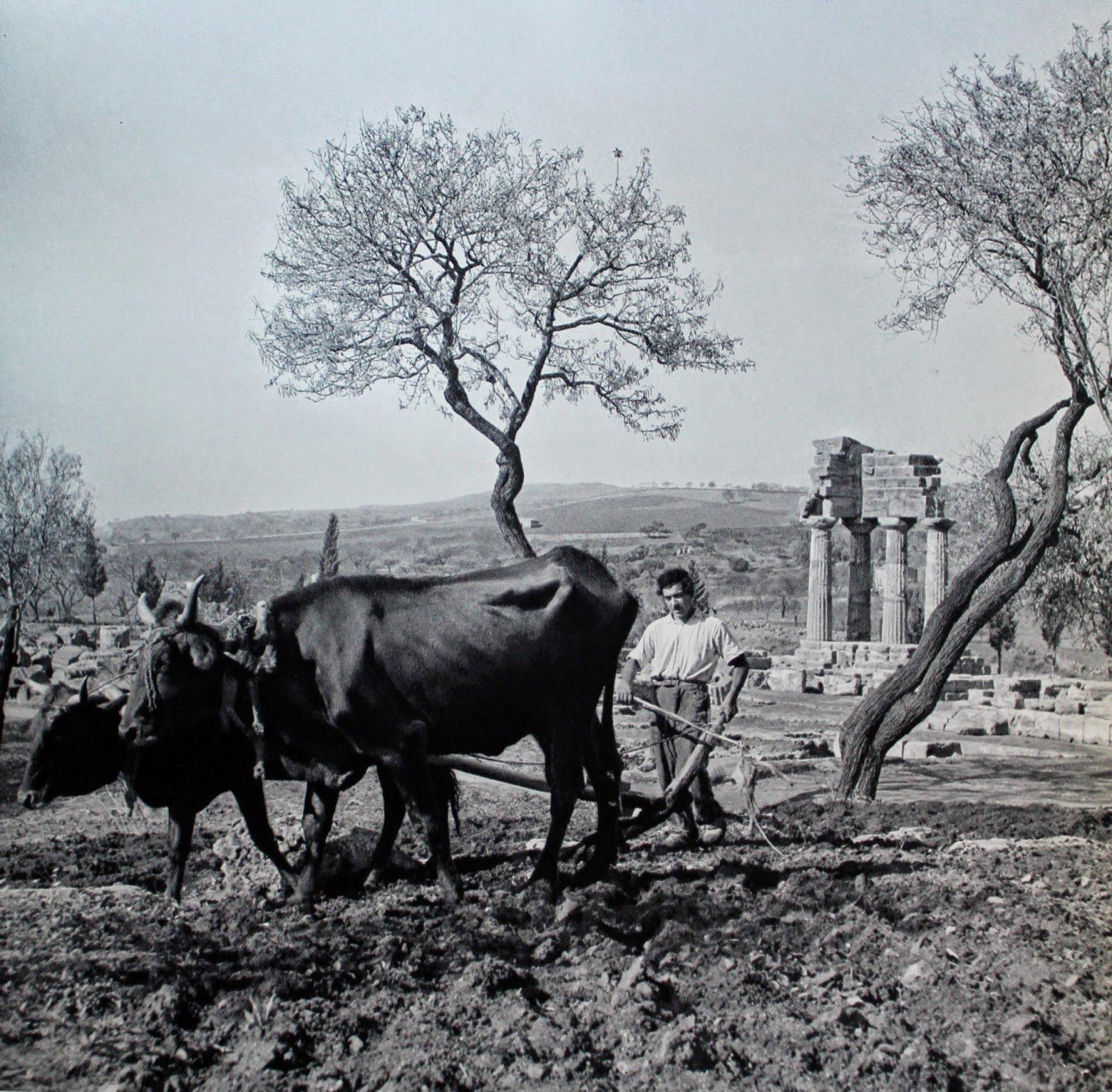 contadino nella valle dei templi