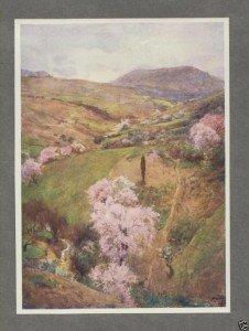 Una specie di ebbrezza primaverile emana dalla natura in festa ITALY SICILY 1911 SPRING DAY in a Valley near GIRGENTI.