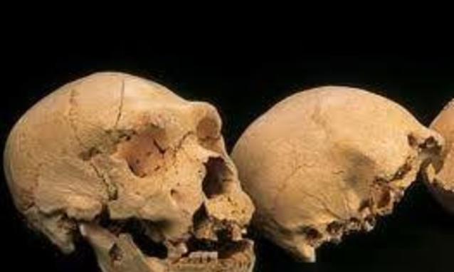 Scoperto il più antico DNA. E' di un ominide di 400 mila anni fa