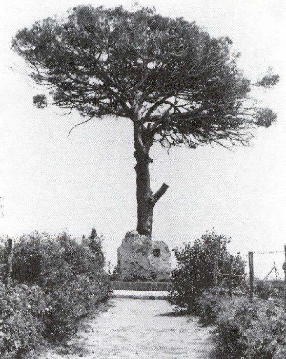 pino-di-pirandello